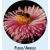 caps abeille/ fleur